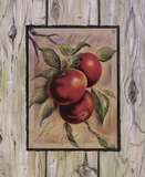 Pomme Fructus Print on Canvas by Constance Lael