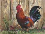 Bantie Rooster Print on Canvas by Nenad Mirkovich