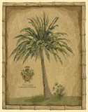 Caribbean Palm III With Bamboo Border Print on Canvas by Betty Whiteaker
