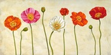 Coquelicots Print on Canvas by Cynthia Ann