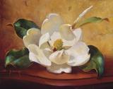 Magnolia Glow I Print on Canvas by Fran Di Giacomo