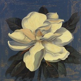 Glowing Magnolia Print on Canvas by Curtis Parker