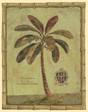 Caribbean Palm IV With Bamboo Border Print on Canvas by Betty Whiteaker