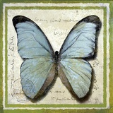 Butterfly Print on Canvas by Karen J. Williams