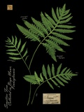 Sensitive Fern Print on Canvas by Brian Foster