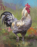 Purple Rooster Print on Canvas by Nenad Mirkovich