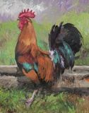 Red And Turquoise Rooster Print on Canvas by Nenad Mirkovich