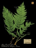 Hay Scented Fern Print on Canvas by Brian Foster