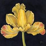 Iris Jaune Print on Canvas by Constance Lael