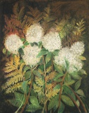 Hydrangeas and Ferns Print on Canvas by Maret Hensick