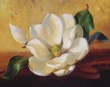 Magnolia Glow II Print on Canvas by Fran Di Giacomo