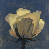 Glowing White Rose Print on Canvas by Curtis Parker