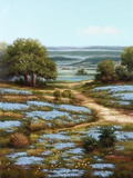 Valley of the Bluebells I Print on Canvas by  Arcobaleno
