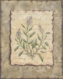 Vintage Herbs, Sage Print on Canvas by Constance Lael