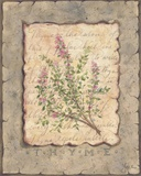 Vintage Herbs, Thyme Print on Canvas by Constance Lael