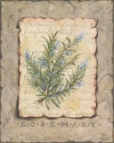 Vintage Herbs, Rosemary Print on Canvas by Constance Lael