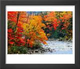Stream in Autumn Woods Prints by Jack Hollingsworth