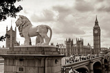 London - Lion Prints
