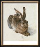 Hare, 1502 Art by Albrecht Dürer