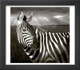 Black & White of Zebra and Plain, Kenya Prints by Joanne Williams