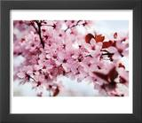 Japanese Cherry Blossom Prints by Kai Schwabe