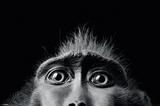 Tim Flach Monkey Eyes Prints