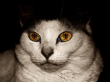 Infected Cat Photographic Print by  Exploding Art