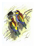 Bee Eater Giclee Print by Friedhelm Weick