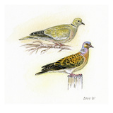 Doves I Giclee Print by Friedhelm Weick