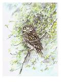 Little Owl II Gicléedruk van Friedhelm Weick