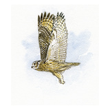 Eagle Owl Giclee Print by Friedhelm Weick
