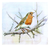 Robin Reproduction procédé giclée par Friedhelm Weick