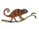 Chamaeleon Giclee Print by Eva Jaeger