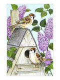 Tree Sparrows Premium Giclee Print by Friedhelm Weick