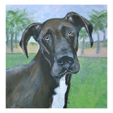 Buster Giclee Print by Mary-Jo Murphy