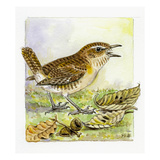 Wren Reproduction procédé giclée par Friedhelm Weick