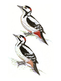 Woodpeckers I Giclee Print by Friedhelm Weick