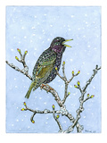 Starling Giclee Print by Friedhelm Weick