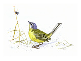 Yellow Wagtail Giclee Print by Friedhelm Weick