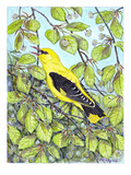 Oriole III Giclee Print by Friedhelm Weick