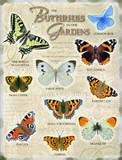 The Butterflies in our gardens Blechschild