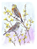 Yellowhammer Premium Giclee Print by Friedhelm Weick