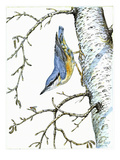 Nuthatch Reproduction procédé giclée par Friedhelm Weick