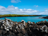 Seymour Norte (Galapagos) Photographic Print by Oliver Schwartz