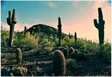 Desert Garden in Arizona Plakaty