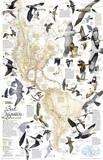 National Geographic - Bird Migration, Western Hemisphere Map Laminated Poster Kunstdrucke von National Geographic