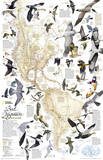 National Geographic - Bird Migration, Western Hemisphere Map Laminated Poster Láminas por Geographic, National