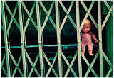 Baby Doll Through Security Fence NYC Prints