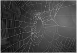 Spider Web b/w Photo
