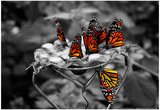 Butterflies at the Bronx Zoo NYC Posters